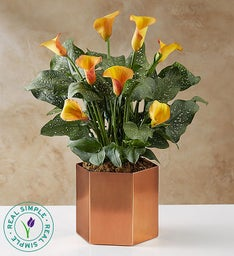 Majestic Fall Calla Lily by Real Simple®