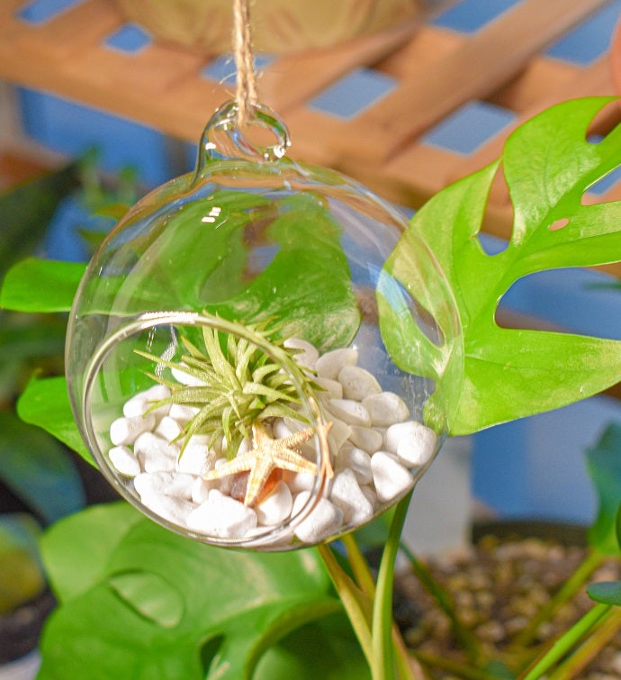 Air Plant Hanging Glass DIY Terrarium Gift Kit